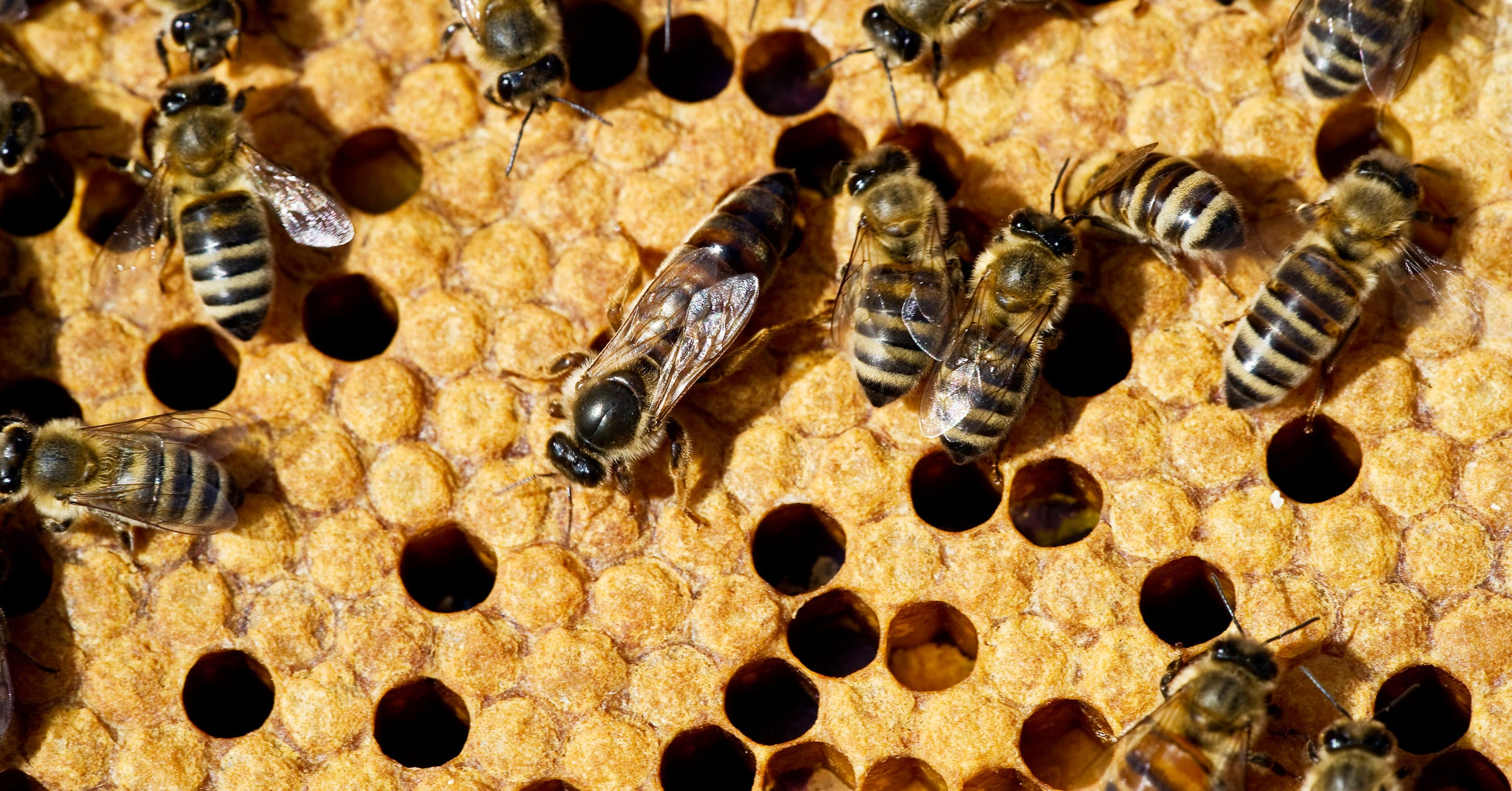 Honeybees Show Improvement After Bad Year