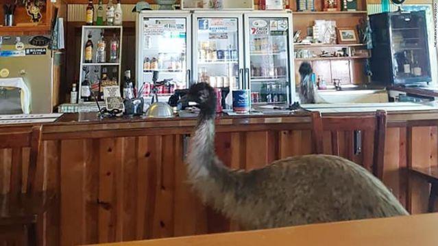 Australia hotel bans emus for bad behavior