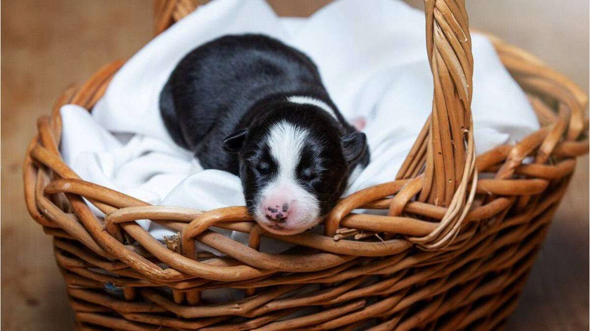 'Miracle' puppy born with six legs