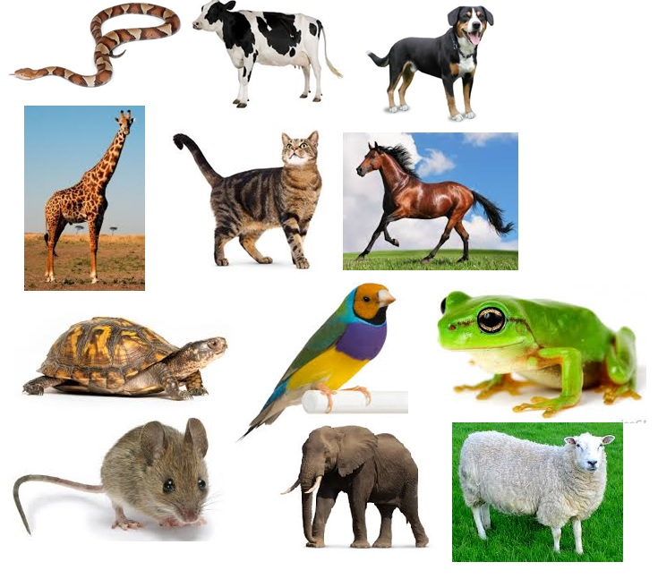 Do You Know Your Animals